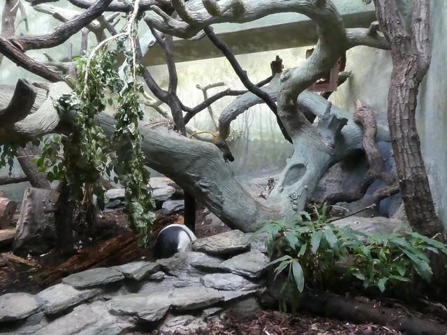 Anlage Zoo Frankfurt