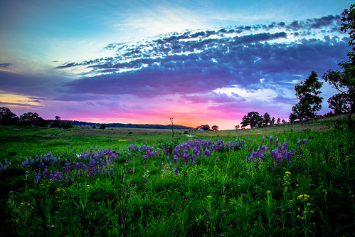 middleton wisconsin unitedstates madison pheasant branch conservancy grass flowers sunset purple trees clouds