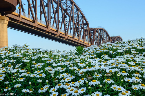 louisville ohioriver sunrise daisies bigfourbridge
