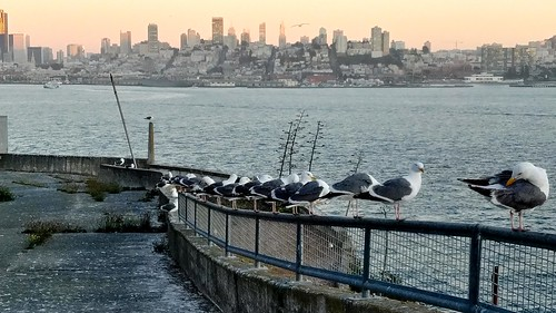 Seagulls and San Francisco
