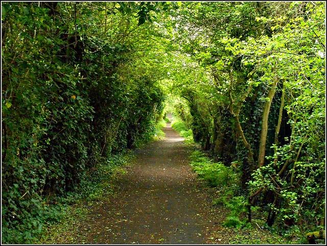 The Sutton Trod ..