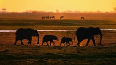 Российским путешественникам порекомендовали посещение Танзании