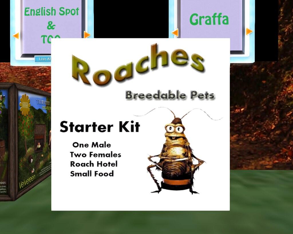 Breedable Pet Roaches Starter Kit   O  o | O__o Ummm   I thi