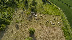DJI_0171 - Photo of Moreuil