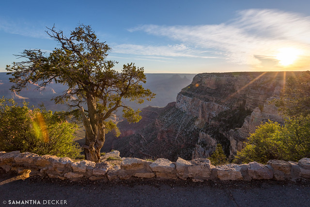 Grand Canyon Tree at Sunrise