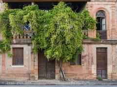 Trees, shrubs & vines