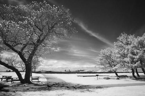 bw ir cloud tree tripod r72 monochrome blackandwhite infrared digitalinfrared bostonharborislands fortwarren georgesisland unitedstatesofamerica boston