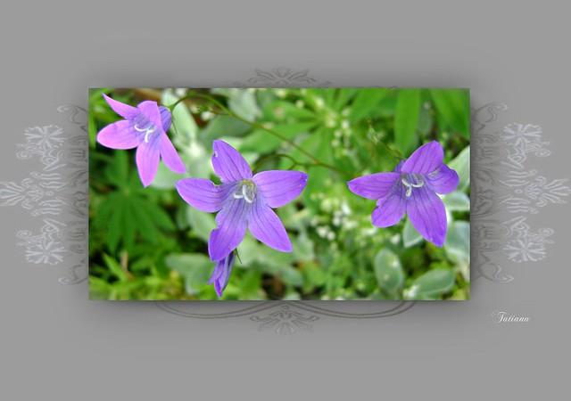 Lovely wild flowers., Sony DSC-S730