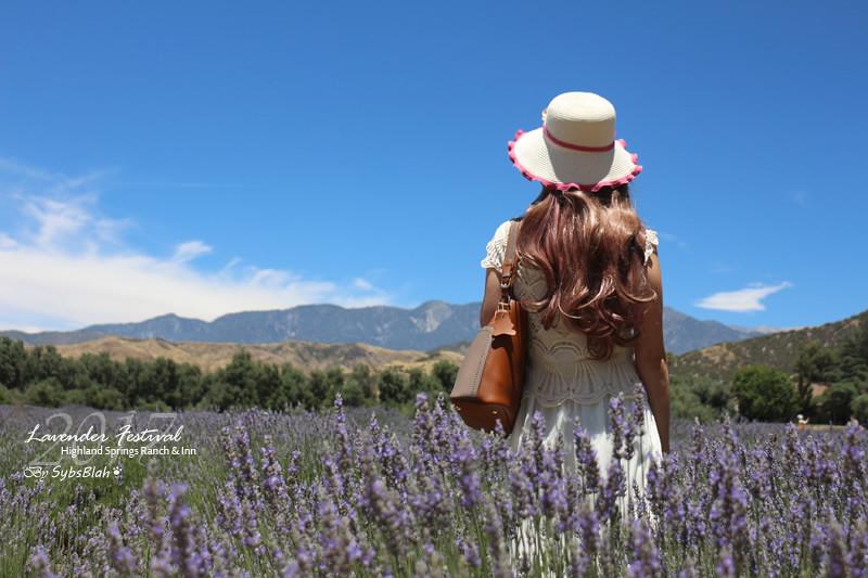 薰衣草,薰衣草花田,薰衣草花祭,lavender,lavender festival,123 Farm,遊記,美國,南加州,旅遊,輕旅行,賞花,出遊