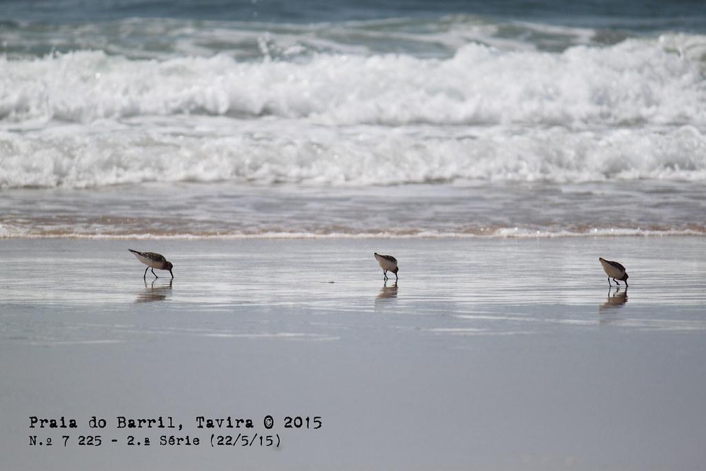 Praia do Barril, Santa Luzia. © 2015
