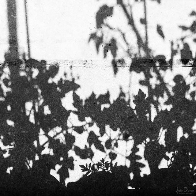 leaf shadows | leeds