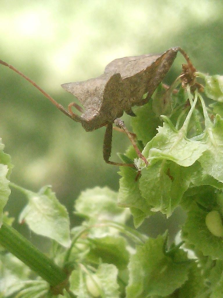 fotografía de insecto