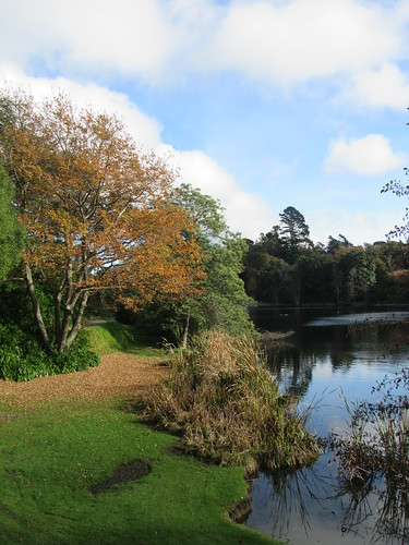 outdoor path lake virginia tree autumn leaves water stjohnshill whanganui newzealand