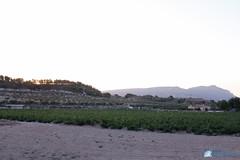 Bodega Cooperativa de Castalla-103