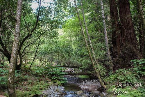 170528d Miur Woods _049