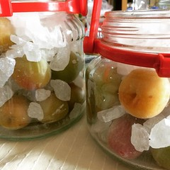 "the recipe that came with the ume said to freeze the fruit for at least 24 hours, so after cleaning them, I froze them. today I added them to bottles and ""layered"" in the rock sugar...7 days to ume syrup and then I'll make jam with the fruit...exciting:pr"