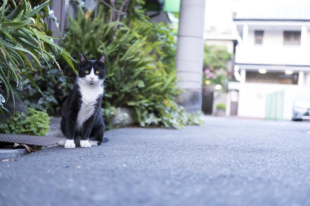 cat @ osaka