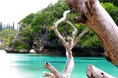 Pine_Island_New_Caledonia