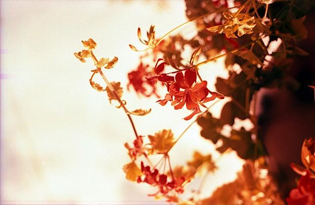 Flower Power #11