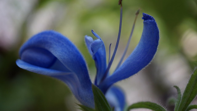 Le ballet bleu, Sony NEX-3N, Sony E 30mm F3.5 Macro