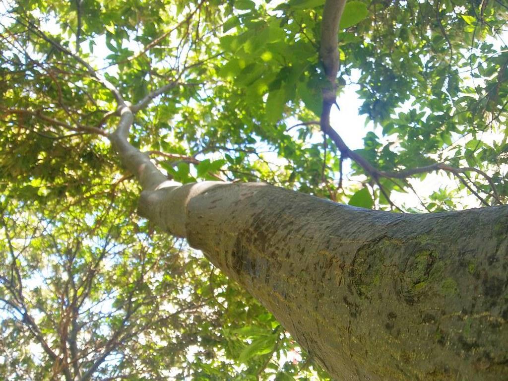 Bajo la sombra de un buen árbol. Fotos de domingo 2017. 26/53. #fotosdedomingo_2017 #losrosales #photography #phonephoto