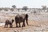 Elephants 4148