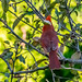The Cardinal's Back by Stephen Downes