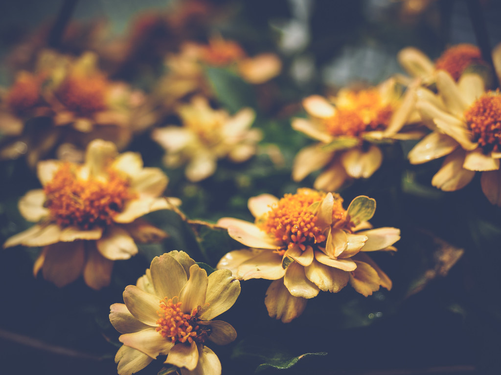 little greenhouse flowers