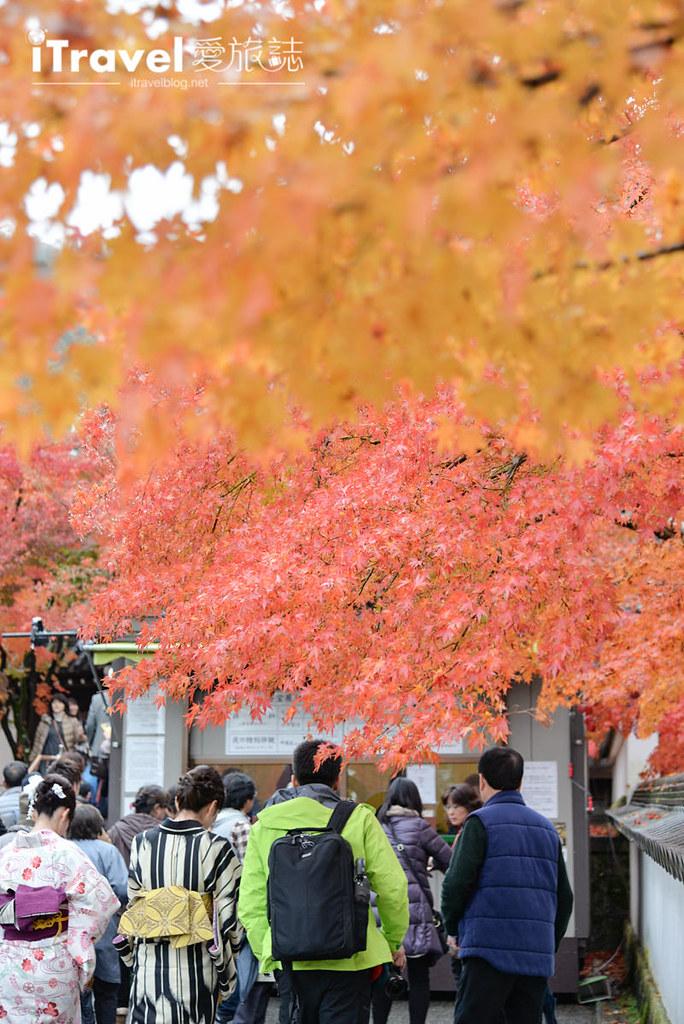 京都赏枫景点 永观堂 (8)