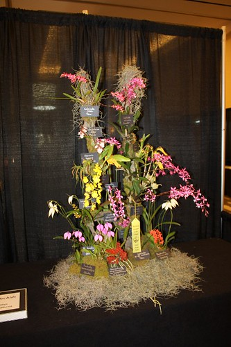andys_orchids_exhibit
