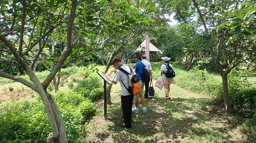 Buttefly Hill, Pulau Ubin