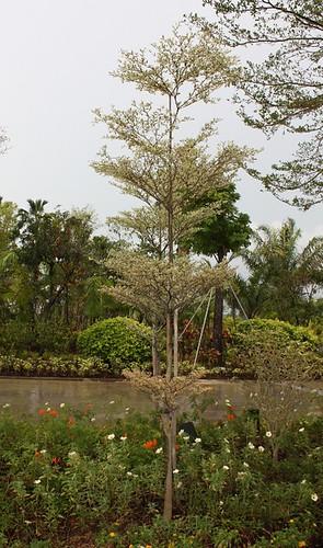 layered_tree