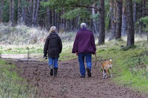 dog-walking-1070076_1920