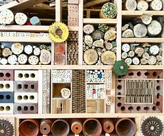 Evolving bee hotel #bees #wildbees #beehotel