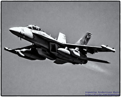 ZOOMING GROWLER IN BLACK & WHITE