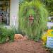 LIon Topiary