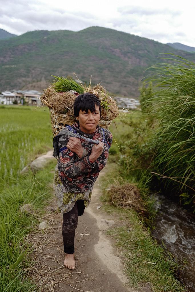Sketch-Bhutan-Drukasia-Travel-76