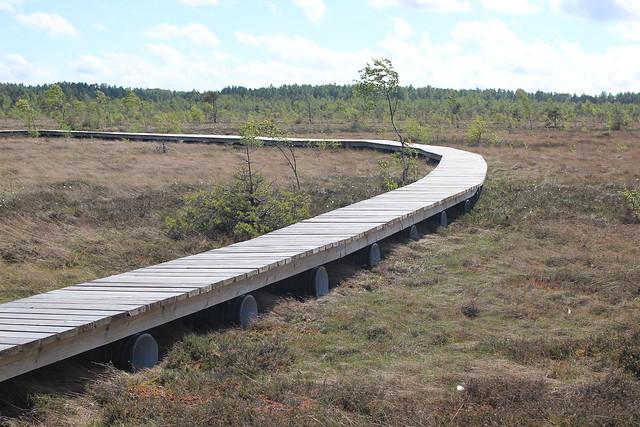 Augstumal_Eco_trail