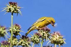 Aves Diversas (Birds)