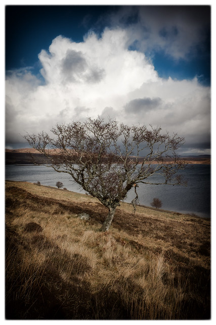 Tree above Loch Loyal, Fujifilm X70