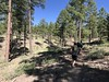 Scenes from the Big Pine trail races today