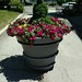 Planter at West