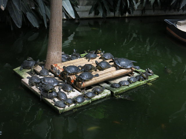 Turtles at the Atocha station