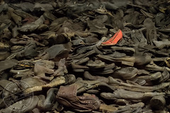 Auschwitz I Block 5 ? Physical evidence of crime