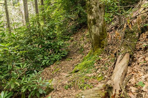 Sols Creek Falls trail - 2