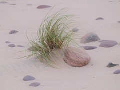 Marram Grass at Sandwood Bay
