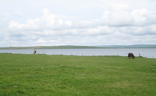 horses + Loch of Stenness