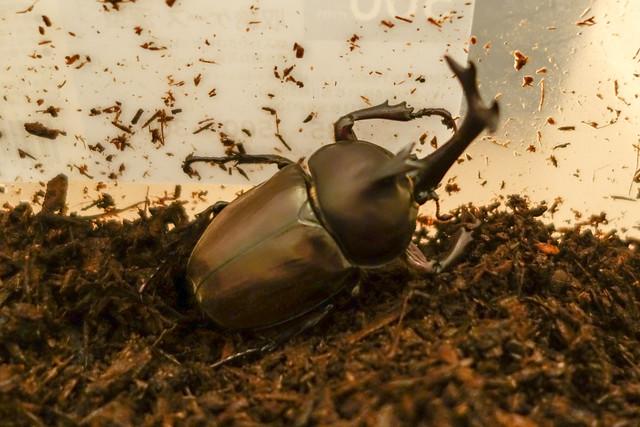 ヒノキふわふわマット10L(5Lx2袋)(クワガタ、カブトムシ成虫飼育用)  九十九里クワガタファーム