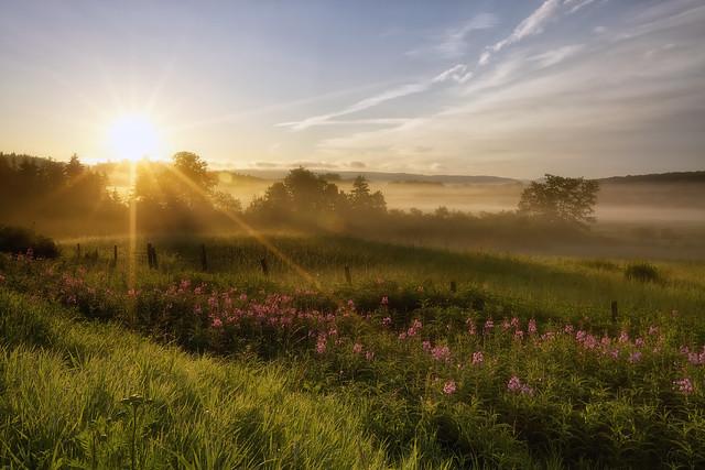 Un matin brumeux de Juillet