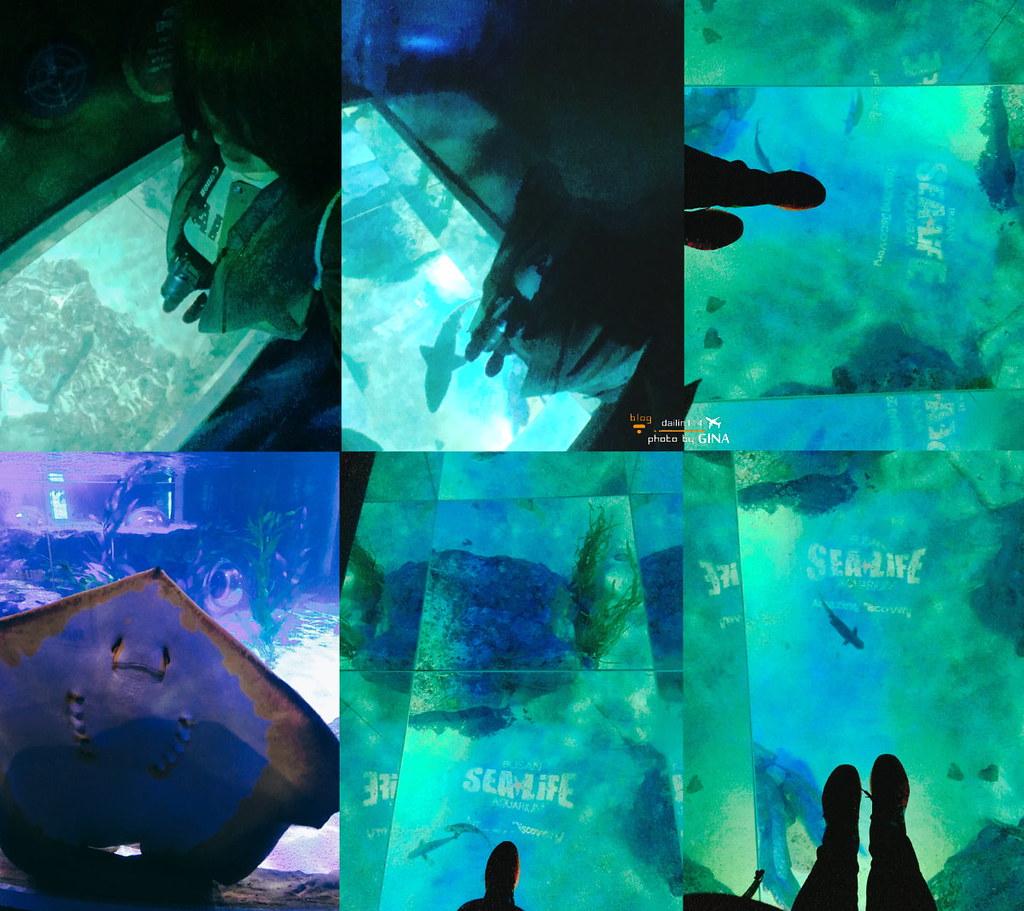 釜山水族館 情侶/親子遊 韓國最大海底主題水族館 讓我回到童年 + 海雲台玩沙 從南浦、釜山站直達公車教學詳細解說  부산아쿠아리움 @Gina Lin